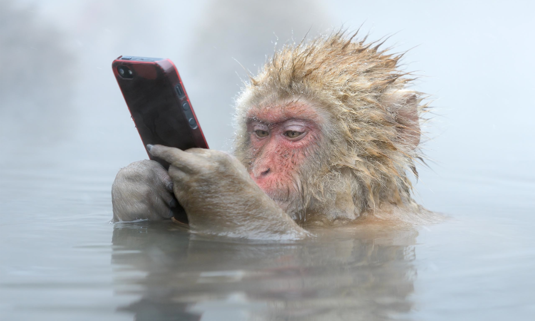 EHRs and Snow Monkeys: Meaningful Use and the Slow Adoption of EHR Technology